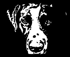 Logo Hundewunder | Hundeschule in Potsdam | Linda Wunderlich