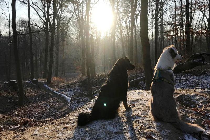 Hundewunder   Anti-Jagdtraining
