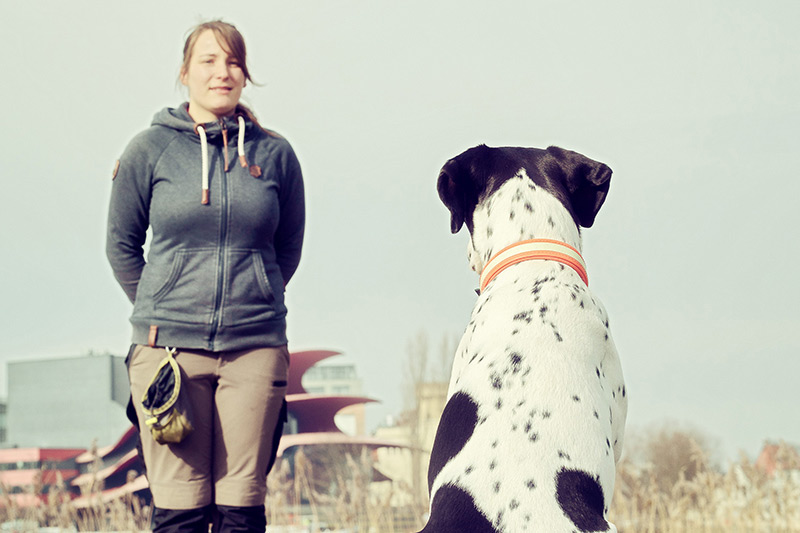 Hundewunder | Hundeschule in Potsdam | Hund | Grunderziehung, Welpenschule | Junghunde
