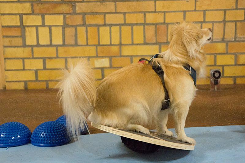 Hundewunder | Hundeschule in Potsdam | Gymnastik