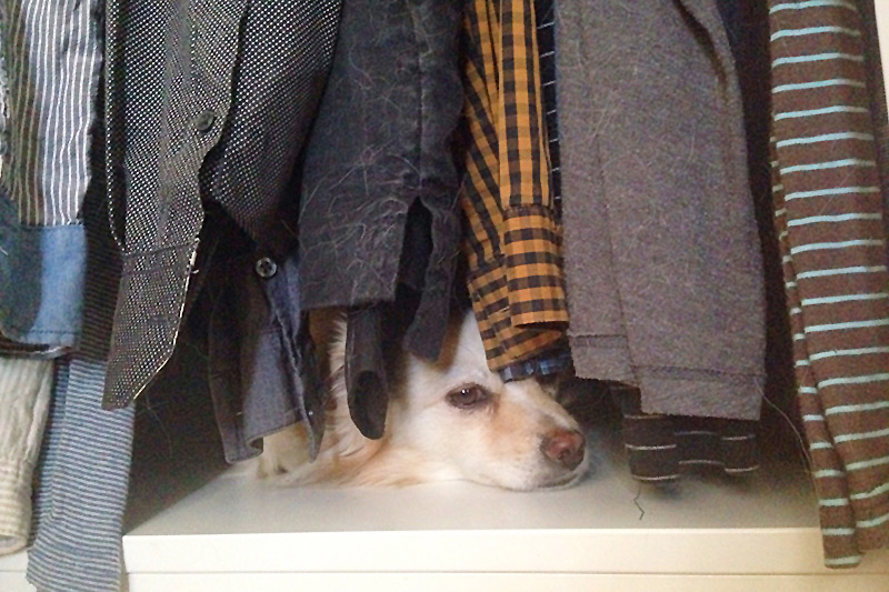 Hundewunder | Hausbesuch