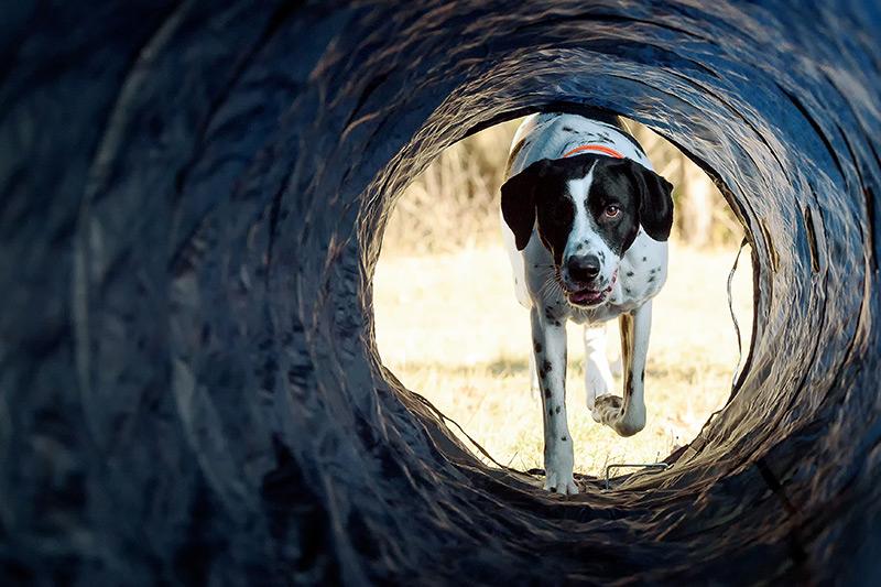 Hundewunder | Hundeschule in Potsdam | Longility