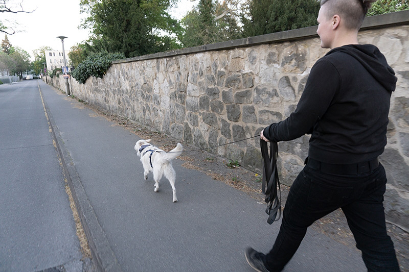 Hundewunder | Hundeschule in Potsdam | Mantrailing